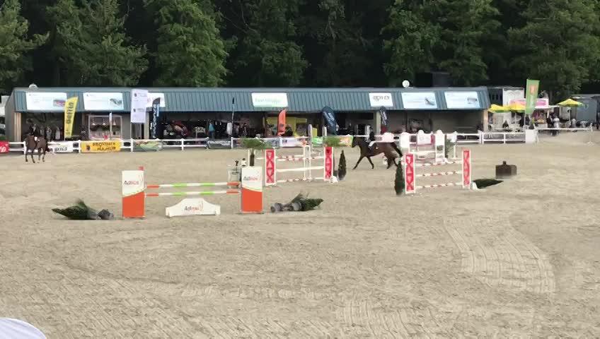 Championnat de Belgique Jeunes Chevaux - Jumping - 2019