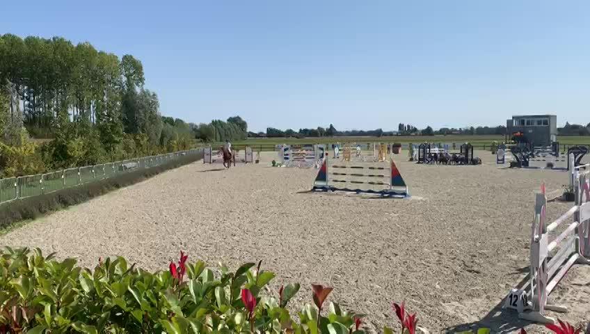 Concours Vieux Chevaux