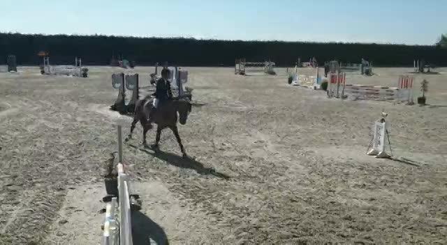Concours jeunes chevaux 2021
